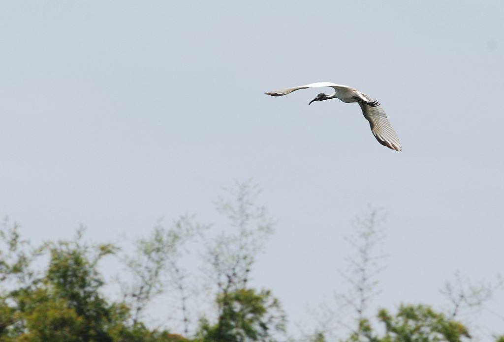 ibis_landing_1__ranganthitu_2007_11_17